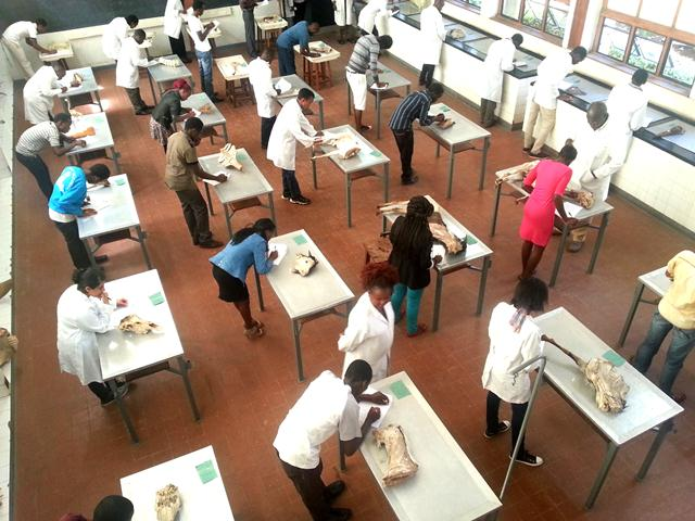 BVM first year students do their end of semester practicals